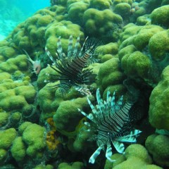 2-Stop Snorkel Tour in Grand Cayman
