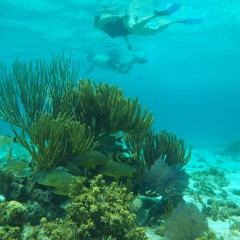 3-Stop Snorkel Tour in Grand Cayman